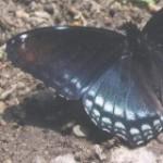 Profile photo of Brenda VR